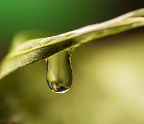 Water PuriFIcation Technologies Service